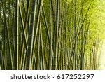 Bamboo Forest  Natural...