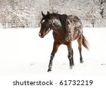 Dark Bay Horse Covered In Snow...