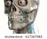 human anatomy face closeup.... | Shutterstock . vector #617367083