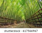 lovers take a walk in bamboo...   Shutterstock . vector #617566967