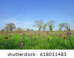 Lowland Hay Meadow With...
