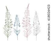 Vector Botanical Illustration...