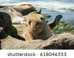 A Seal Puppy On The Beach  . L...