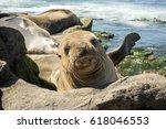 a seal puppy on the beach  . la ... | Shutterstock . vector #618046553