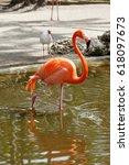Small photo of American Flamingo, Everglades National Park, Florida, USA
