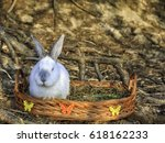 White Bunny In The  Basket ...