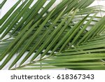Palm Leaves On White Wooden...