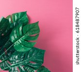 Tropical Palm Leaves On Pink...