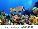 Small photo of Doublebar bream (acanthopagrus bifasciatus) , Red Sea, Egypt