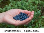Small photo of Berries in hand, black berries, bacca Berries in hand, black berries, bacca