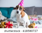 Photo Of Cute Jack Russel...