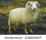 Small photo of Ram portrait