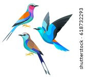 Stock vector stylized birds lilac breasted european and racquet tailed roller 618732293