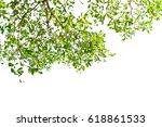 green leaves isolated on white... | Shutterstock . vector #618861533