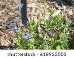 Monarch Butterfly On Blue Flower