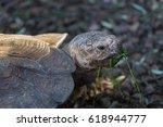 Portrait Of A Giant Tortoise...