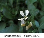 white flower with fly | Shutterstock . vector #618986873