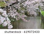cherry blossoms   osaka japan | Shutterstock . vector #619072433