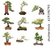 chinese bonsai  isolated in... | Shutterstock . vector #619198793