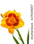 yellow red lily flowers and...   Shutterstock . vector #619334057