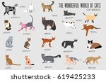 vector breed cats icons set.... | Shutterstock .eps vector #619425233