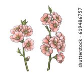 set of almond blossom branches... | Shutterstock .eps vector #619486757