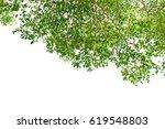 green leaves isolated on white... | Shutterstock . vector #619548803