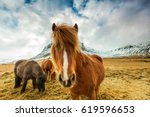 Stock photo horses in the mountains in iceland 619596653