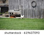 Small photo of GReen grass with fence with chicken and farmyard accoutrements.
