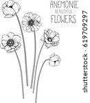 drawing flowers. anemone flower ... | Shutterstock .eps vector #619709297