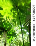 green feeling  | Shutterstock . vector #619738007