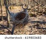 old bird nest on tree in spring ... | Shutterstock . vector #619803683