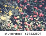 red and yellow flowers over... | Shutterstock . vector #619823807