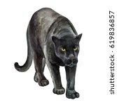 black jaguar isolated on white... | Shutterstock . vector #619836857