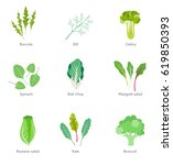 set of green lettuce leaves in... | Shutterstock .eps vector #619850393