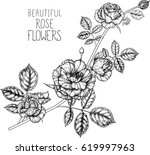 rose flowers drawing... | Shutterstock .eps vector #619997963