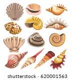 shells or seashells vector... | Shutterstock .eps vector #620001563