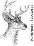 sketch of a deer head | Shutterstock .eps vector #620010683