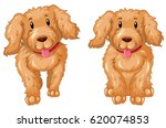 two puppies with brown fur... | Shutterstock .eps vector #620074853