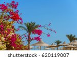 Idyllic Summer Vacation. Luxur...