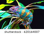 yemen chameleon isolated on... | Shutterstock . vector #620164007