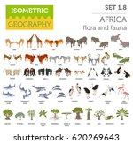 flat 3d isometric africa flora... | Shutterstock .eps vector #620269643