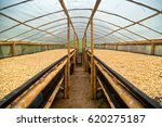 coffee drying greenhouse | Shutterstock . vector #620275187