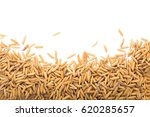 yellow paddy jasmine rice... | Shutterstock . vector #620285657