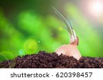 onion field in the garden