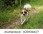 Cute Dog Running   S  Er Hund...
