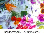 beautiful mixed colorful...   Shutterstock . vector #620469593