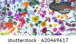 beautiful mixed colorful...   Shutterstock . vector #620469617