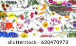 beautiful mixed colorful...   Shutterstock . vector #620470973