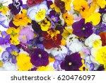 edible flowers   food flowers   ... | Shutterstock . vector #620476097